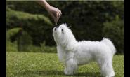 10条让狗狗听你话的建议 悄悄告诉你