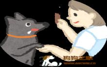 对零食不感兴趣的狗狗该怎么训练?