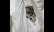 7个猫咪爱塑胶袋的理由