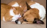 注意卫生改善猫狗的肠道环境