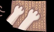 猫咪为什么那么爱磨爪?3大原因一次解密!