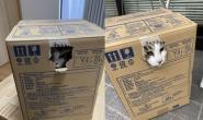 """猫咪看见外出袋秒躲纸箱避难 爸""""整组打包""""去医院"""