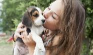 小狗不明白的7件事 缺乏生活经验