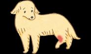 关节卡卡不是缺钙?狗狗的灵活要补对!