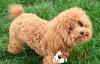 训练宠物狗的五种错误方式