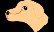 为什么健康的狗狗有湿鼻子呢?