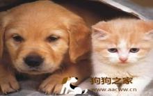 黑狼犬:饲养猫狗观念 13种迷思报哩灾