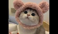 养好家里的小猫咪有哪些要点