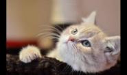 怎么知道猫咪有没有营养不良