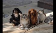 补对营养才能让猫狗关节不死机