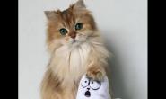 最近猫咪掉毛多有哪些原因