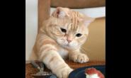 绝育完的猫咪什么时候才能吃饭