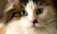 如何保障猫咪的饮食营养