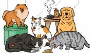 犬猫淋巴癌—难以发现的隐形杀手 及早治疗是关键