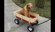 狗狗关节炎和骨关节炎:原因、症状和治疗