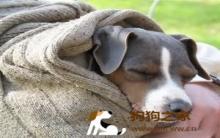 狗狗乱吃东西怎么让他吐出来 狗狗乱吃东西怎么让它吐出来