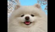 平常要帮狗狗预防肠胃疾病