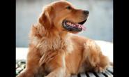 怎么让狗狗长得更加强壮