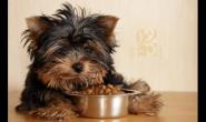 为什么我的狗把它的食物带到另一个房间吃?