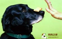 训练宠物犬的方法必知