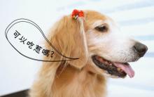 姜汁红豆狗狗元宵 弹牙好消化