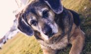 饲主应该抽出时间为失去宠物而悲伤吗?