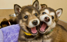 狗狗训练 如何让狗狗们做朋友