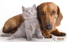 狂犬病症状:狂犬病传播途径及防治知识