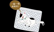 洗衣袋妙用多 地震不再担心猫咪逃窜!