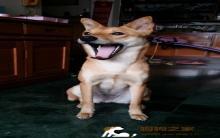 【爱宠物】狗狗呕吐了怎么办