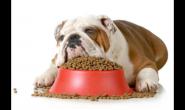 如何减少狗狗毛发的脱落 营养必不可少