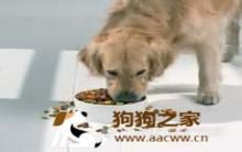 训练狗狗规矩吃饭定时定量
