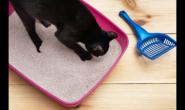 猫咪看起来好好的为什么又忽然血尿了?