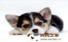 冬季养狗:保暖清洁及美容方法