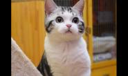 怎么喂食不同年龄的猫咪