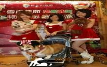 宠物圣诞变装趴 帮流浪犬猫找温馨窝