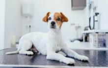 狗狗常见输血原因及相关费用说明
