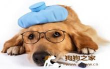 狗感冒症状多 生病15种表现