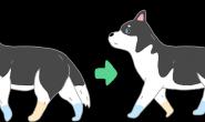 """别再误会狗狗同手同脚啦~它们其实是用""""对角线""""的脚同步走喔!"""