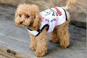高加索犬身上长了很多红痘痘应怎么治疗